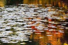 Reflexões da água das almofadas de lírio do vermelho alaranjado Foto de Stock