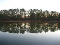 Reflexões da árvore Imagens de Stock