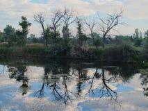 Reflexões da árvore Fotos de Stock