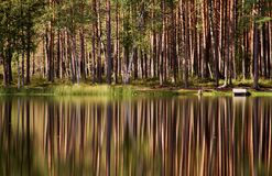 Reflexões da árvore fotografia de stock royalty free
