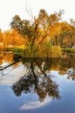 Reflexões da árvore Foto de Stock Royalty Free