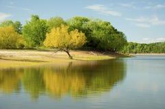 Reflexões da árvore da mola em um lago azul Foto de Stock Royalty Free