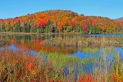 Reflexões da árvore do outono em Vermont imagens de stock