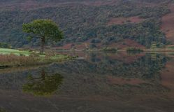 reflexões da árvore no lago Crummock, distrito do lago fotos de stock