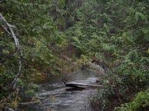 Reflexões da floresta úmida Foto de Stock Royalty Free