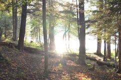 Reflexões da floresta Imagem de Stock