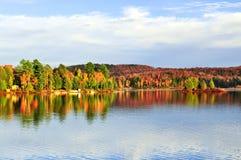 Reflexões da floresta da queda Imagens de Stock Royalty Free