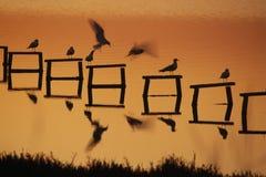 Reflexões da gaivota Fotos de Stock Royalty Free