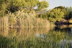 Reflexões da lagoa Imagens de Stock Royalty Free