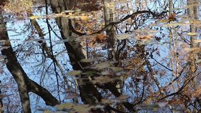Reflexões da lagoa do outono com folhas caídas video estoque