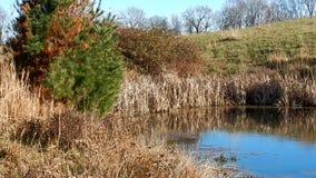 Reflexões da lagoa dos pinheiros & parque estadual de Grandview dos ventos, WV filme