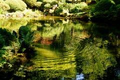 Reflexões da lagoa no jardim botânico japonês Fotografia de Stock
