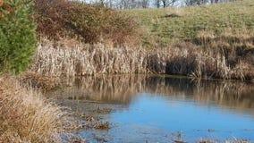 Reflexões da lagoa & parque estadual de Grandview dos ventos, WV vídeos de arquivo