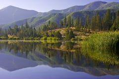 Reflexões da manhã Foto de Stock Royalty Free