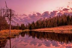 Reflexões da noite no rio em Ontário, Canadá do pinho foto de stock royalty free