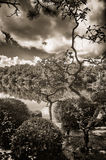Reflexões da nuvem Fotos de Stock Royalty Free
