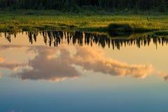 Reflexões da nuvem e do pinho, por do sol imagem de stock royalty free