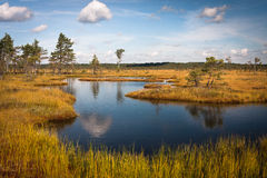 Reflexões da nuvem no lago do pântano Imagem de Stock