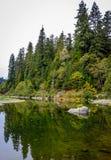 Reflexões da sequoia vermelha fotos de stock royalty free