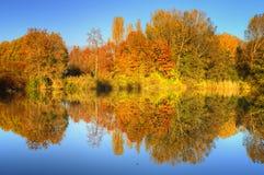 Reflexões das árvores imagens de stock royalty free