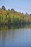 Reflexões das árvores Fotos de Stock