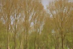 Reflexões das árvores no lago Imagem de Stock Royalty Free
