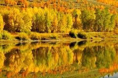 Reflexões das folhas e da água da queda Fotografia de Stock Royalty Free