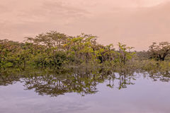Reflexões de árvores exóticas na água fotos de stock