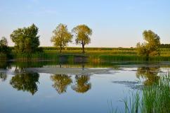 Reflexões de árvores verdes, do céu azul e das nuvens no lago calmo da água Imagens de Stock Royalty Free