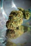 Reflexões de brotamento do cannabis Foto de Stock Royalty Free