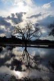 Reflexões do céu Fotografia de Stock