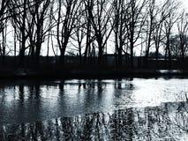 Reflexões do inverno das árvores no rio gelado Imagens de Stock