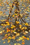 Reflexões do outono Fotografia de Stock