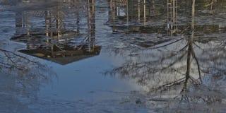 Reflexões do patamar e da árvore na água imagens de stock