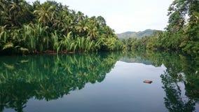 Reflexões do rio da selva Imagens de Stock