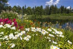 Reflexões do verão fotos de stock