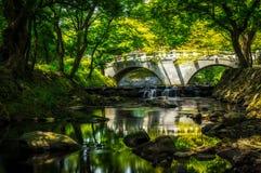 Reflexões do verão Foto de Stock Royalty Free