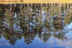 Reflexões dos pinhos fotos de stock
