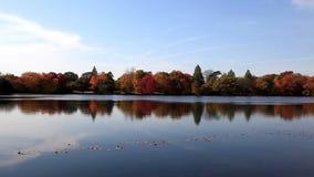 Reflexões em um lago video estoque