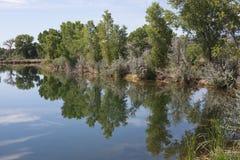 Reflexões em um lago summer imagem de stock