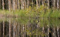 Reflexões em um pântano imagens de stock