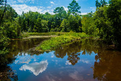 Reflexões na água Fotos de Stock