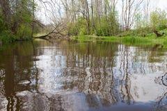 Reflexões na água imagem de stock royalty free