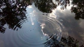 Reflexões na lagoa fotografia de stock royalty free