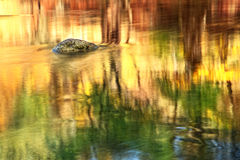 Reflexões no rio Imagens de Stock