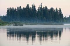 Reflexões Spruce Foto de Stock Royalty Free