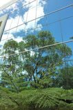Reflexões verdes Foto de Stock Royalty Free