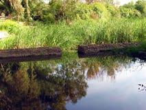 Reflexões verdes Fotografia de Stock Royalty Free