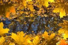 Reflex av träd på vattenyttersidan arkivbild