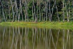 Reflex av trädet royaltyfri foto